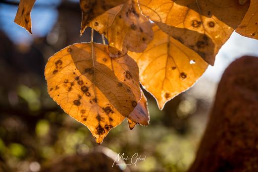 Fall in Fish Creek