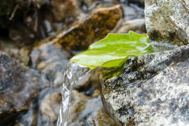 Leaf Spigot