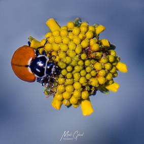 Laddybug Lunch