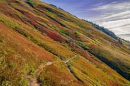 9-12 (m1,278) Colorful Hillsides In Northern Washington