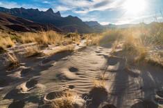 Tanner Beach Dunes