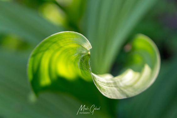 Symmetry & Light