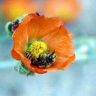 Pollen Love