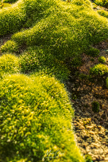 Green Moss 01