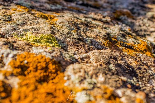 Orange Lichen