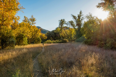 Haunted Canyon Meadow