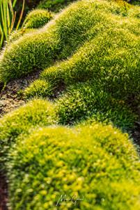 Green Moss 02
