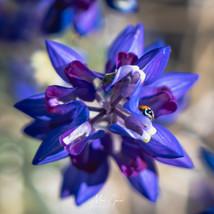 Ladybug on blue & purple