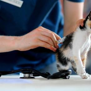 חיסונים חיוניים לחתול