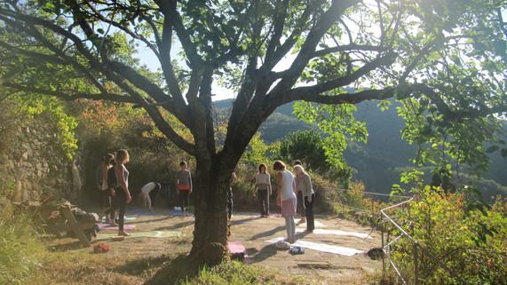 Kundalini Yoga 200h Training - The Tree