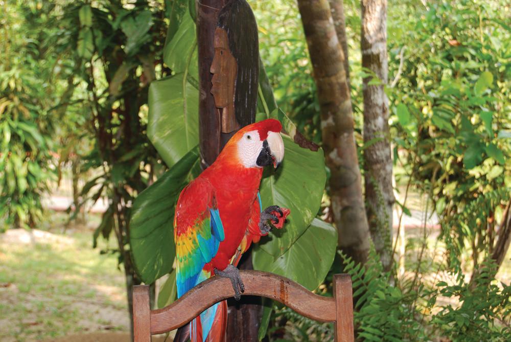 South America_Amazon Jungle Brazil_SR.jp