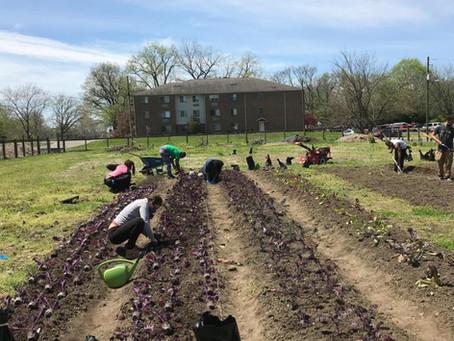Flanner Farm Readies for Spring Season