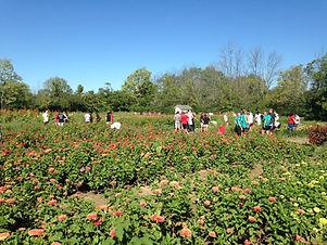 Flower-Farm.jpg