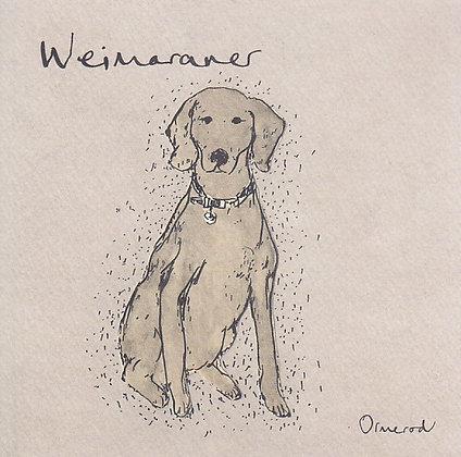Cruz the Weimaraner