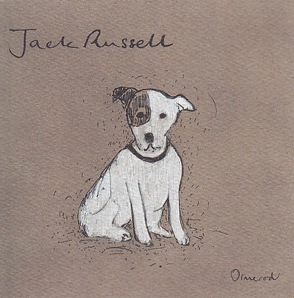 Teddy the Jack Russell