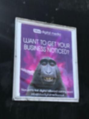 Monkey Live.jpg