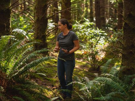 Ingredient story: Sitka Spruce Tips