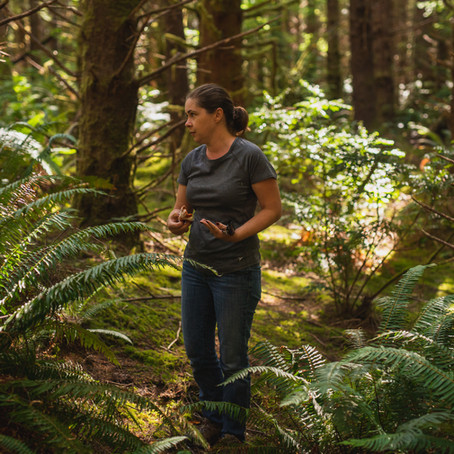 Ingredient story: Sitka Spruce Tips