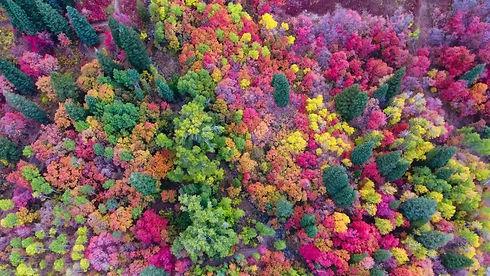 drone-couleurs-automne-utah.jpg