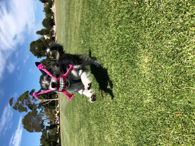 All smiles at Caulfield Park :)