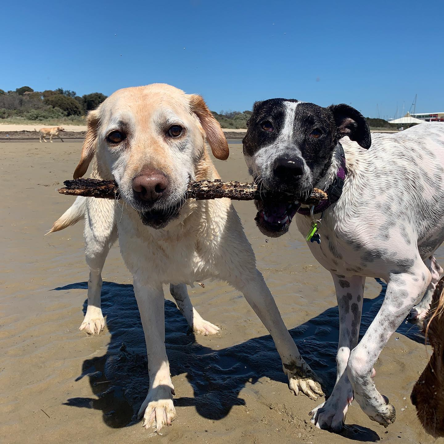 Beach play - Gussie & Juniper