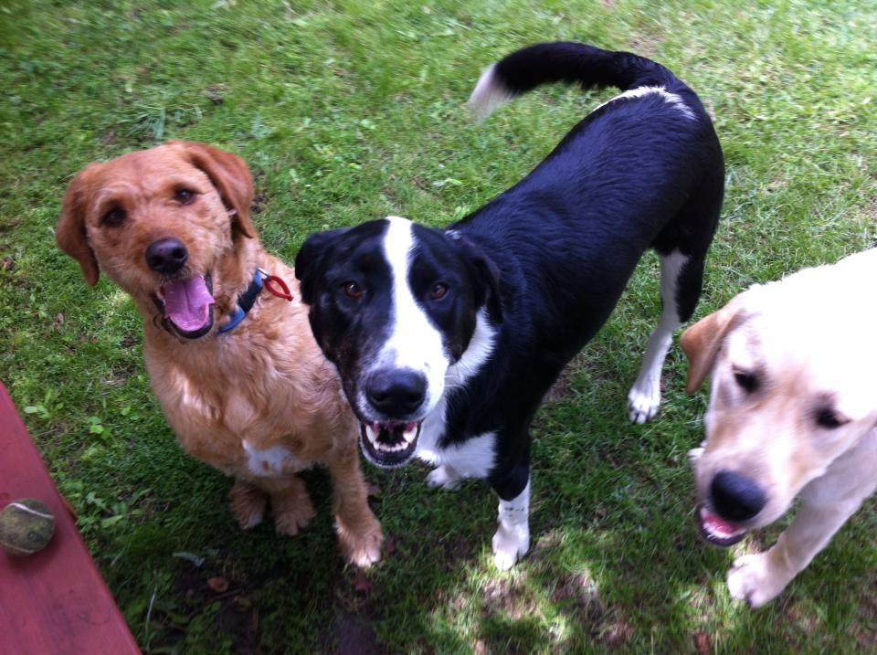 Ellie, Jack & Milo
