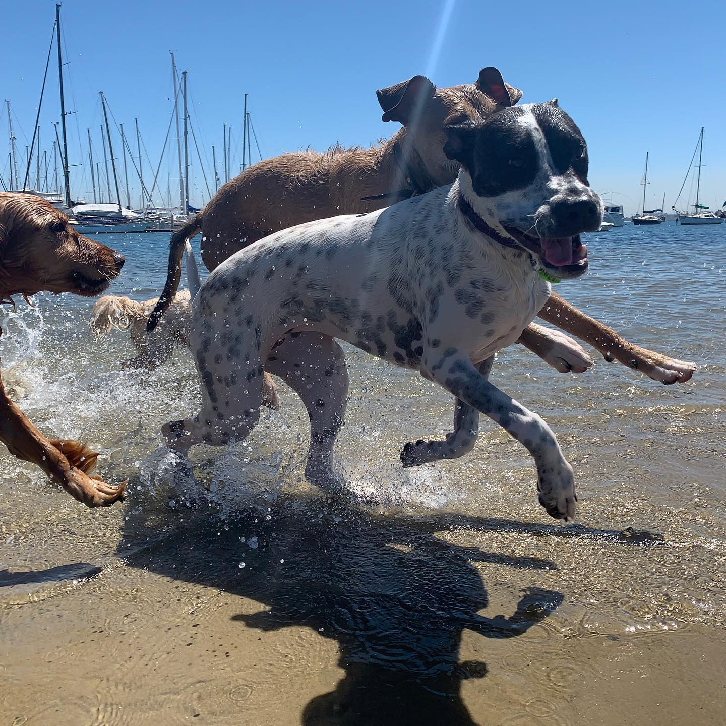 Fun in the sun at Brighton dog beach