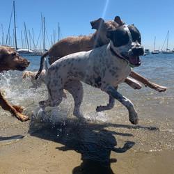Fun in the sun at Brighton dog beach