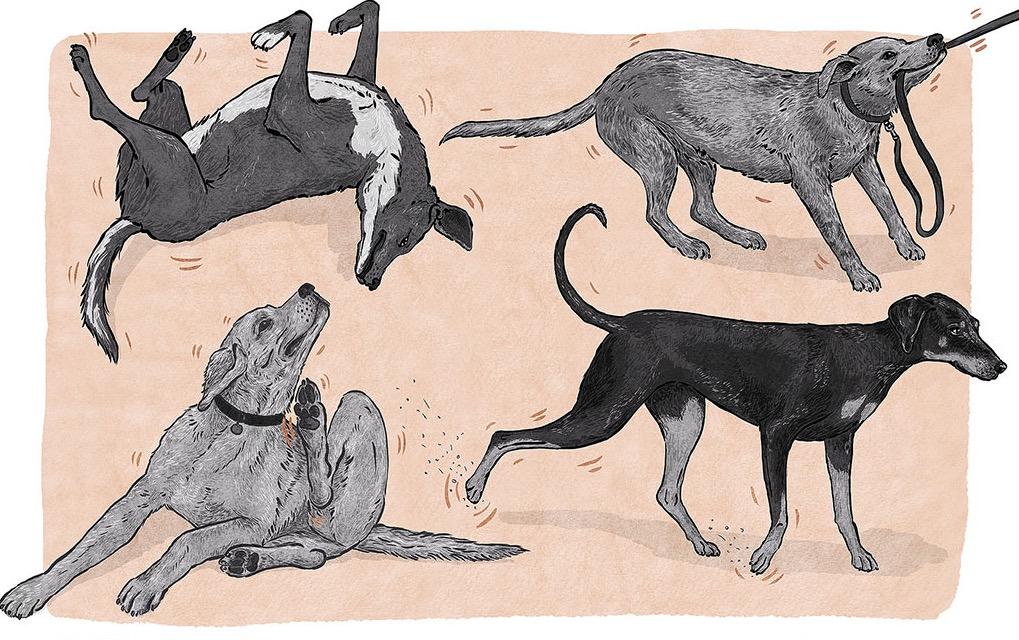 silentconversations_dog_displacement_beh