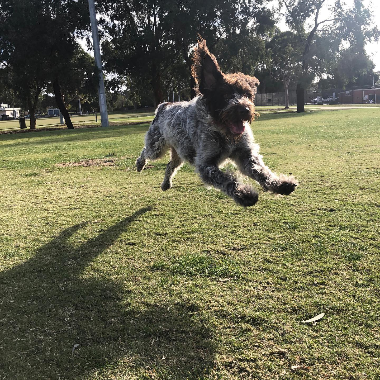 Edie flying through her Friday run!