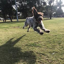 Edie flying through her Friday run!