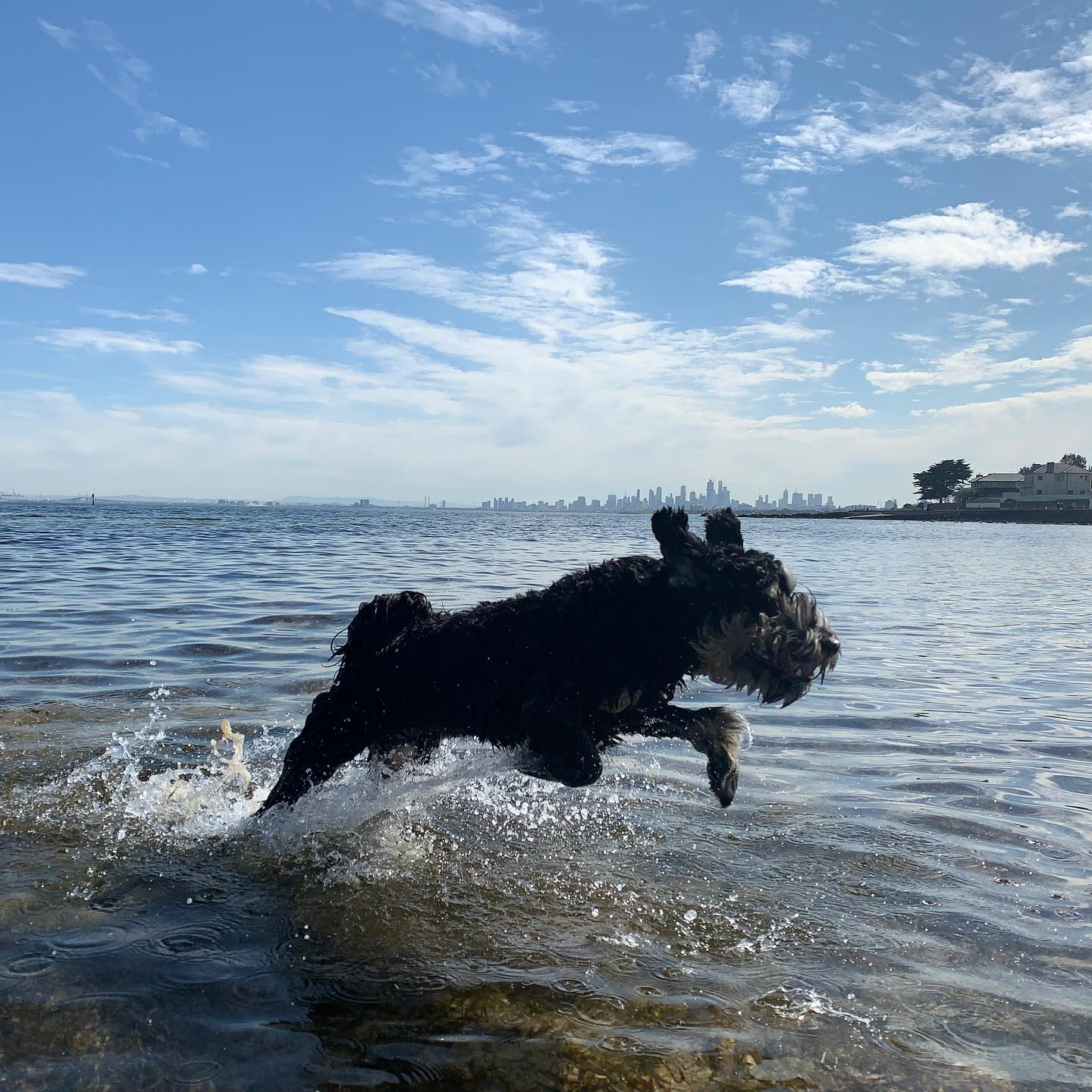 Reggie, Brighton dog beach