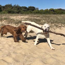 No stick too big, Harvey & Finn :)