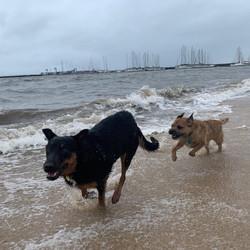 Greta & Groot playing chase :)