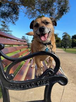 Gizmo at Caulfield Park
