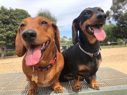 Miles & Lenny - Cool sausages :)
