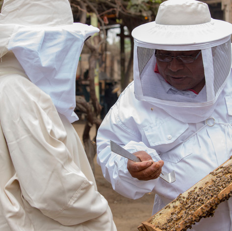 Ruta de la Miel de abeja