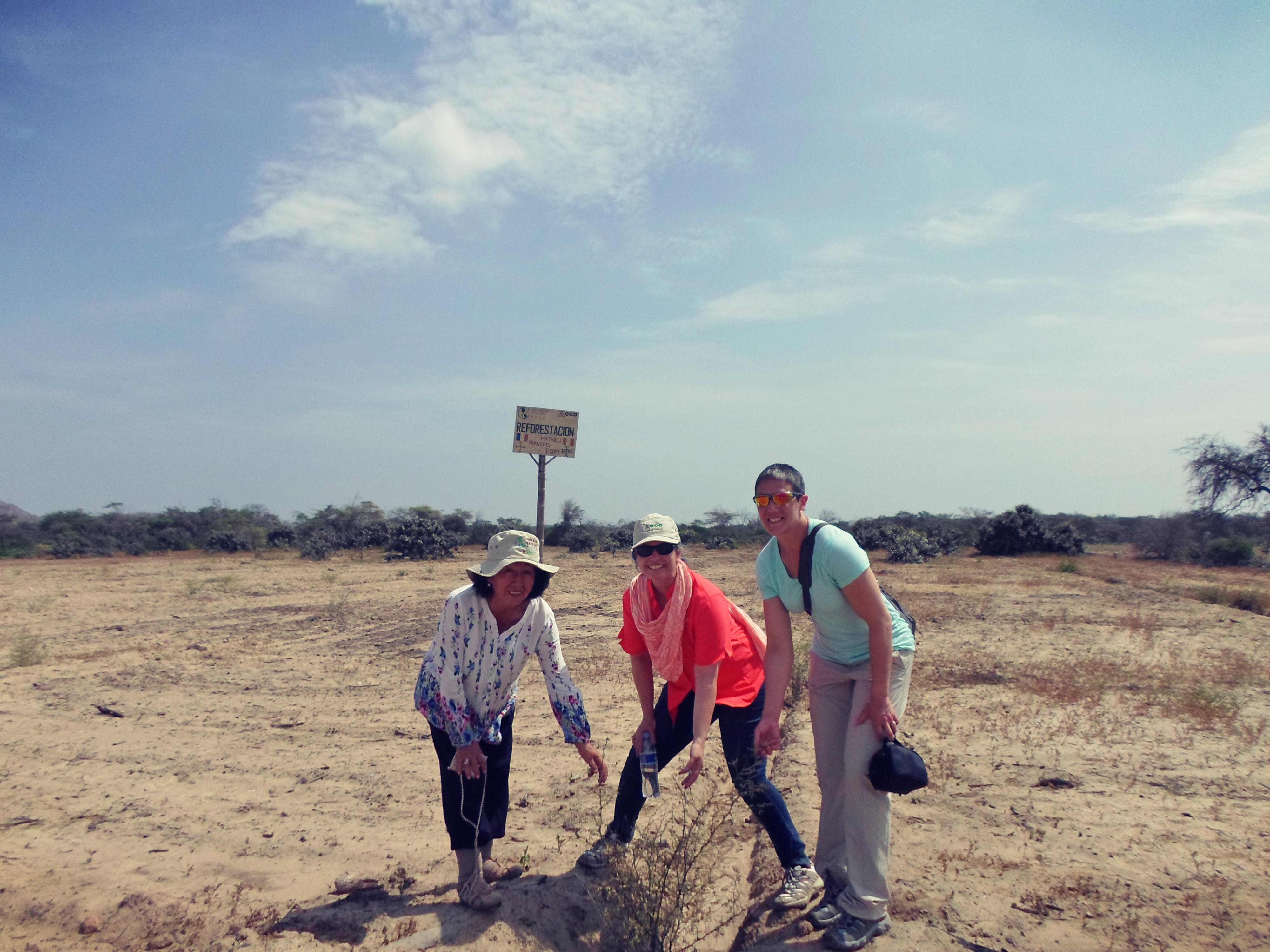 #reforestacion, #ambiente