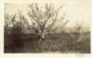 Ricker Hill Farms circa 1939