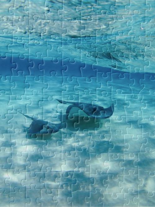 Stingray Puzzle