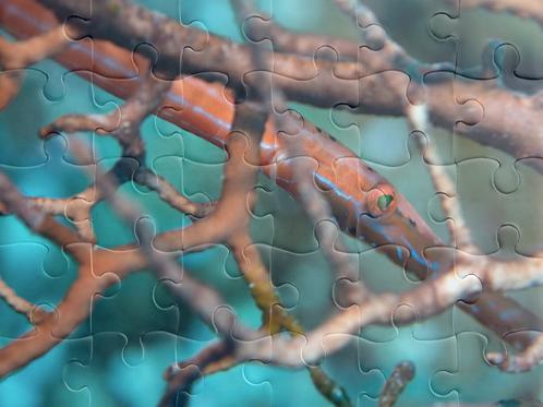 Trumpetfish Puzzle