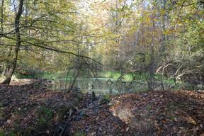 9 Stillgewässer im Wald