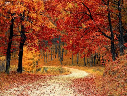 Caminhantes das trilhas