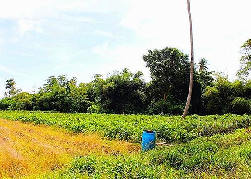 land leased for farmig hope estate grenada