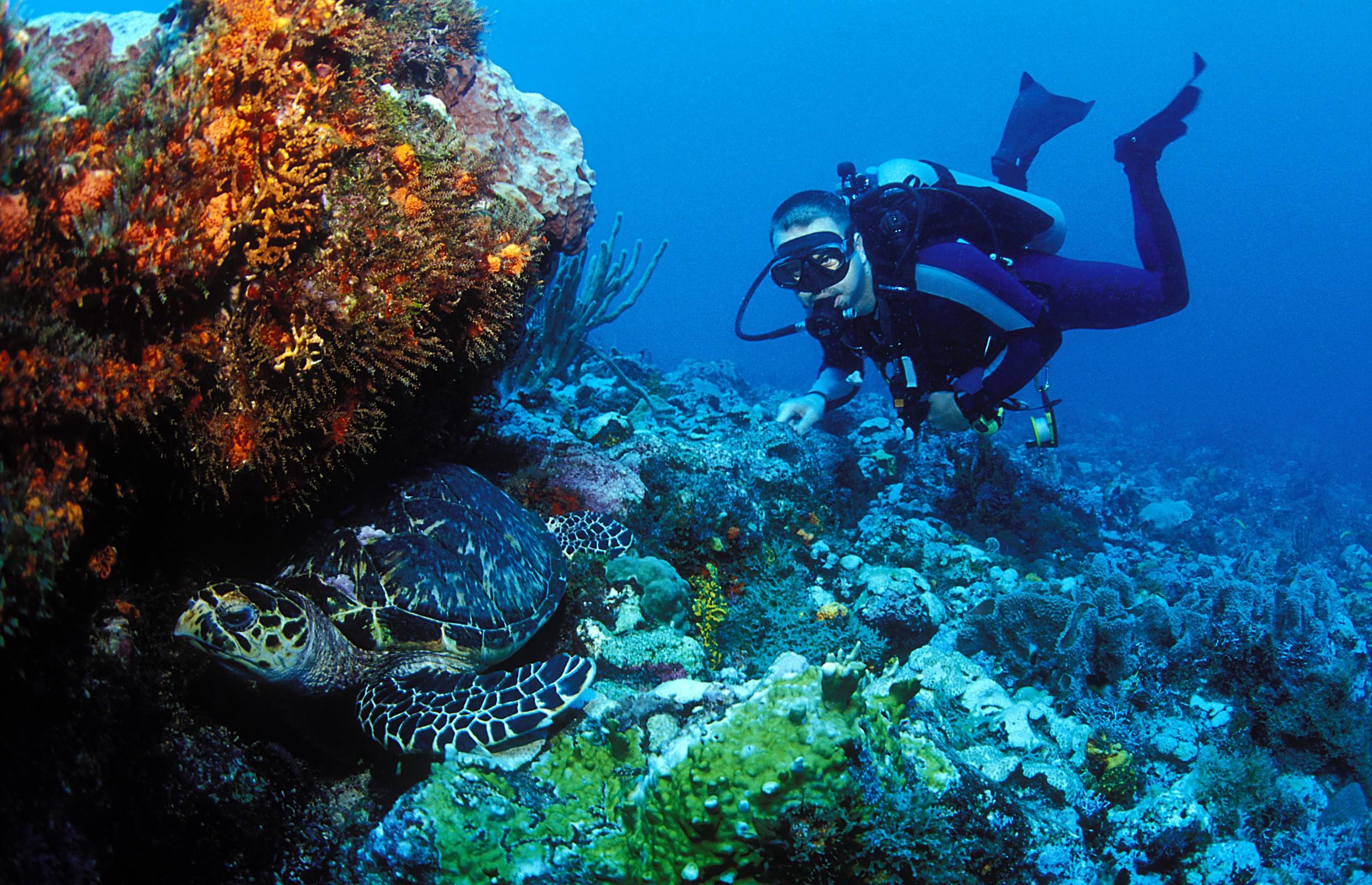 Grenada-caribbean-diving-holiday
