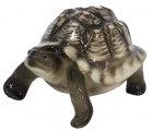 Turtle Light Color