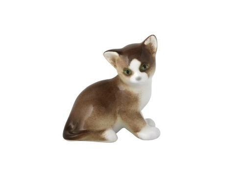 Kitten Paramosha Brown
