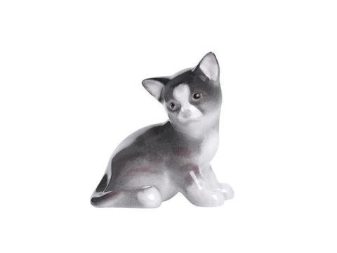 Kitten Paramosha Grey