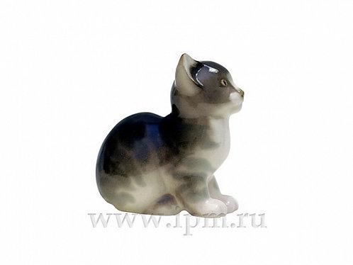 Kitten Tishka