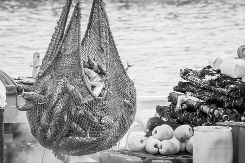Fishing Net_edited.jpg
